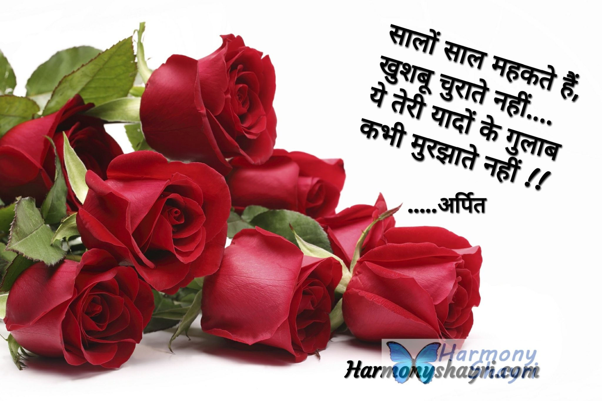 Rose Day Special Top Hindi Shayari Collection Famous Best